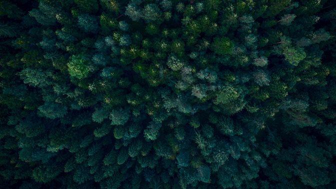 Wald von oben; Europäische Versicherungen verfolgen klimafreundliche Anlagepolitik